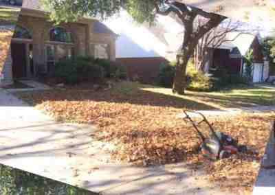 leaf covered yard