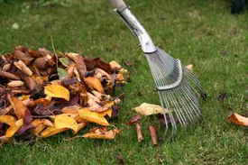 raking leaves - seasonal lawn maintenance in mckinney, tx