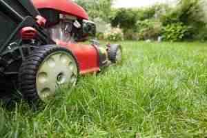 cutting the grass in mckinney